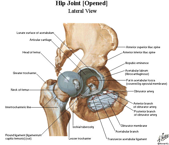 Hip Pain: Learn more! – Saanich Physiotherapy & Sports Medicine